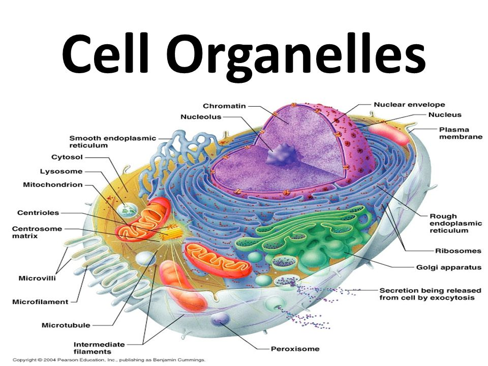 Biology Form One Notes on Cell and Cell Organelles